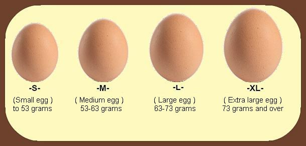 How Much Protein In An Egg | Essential Nutritional Values Of An Egg