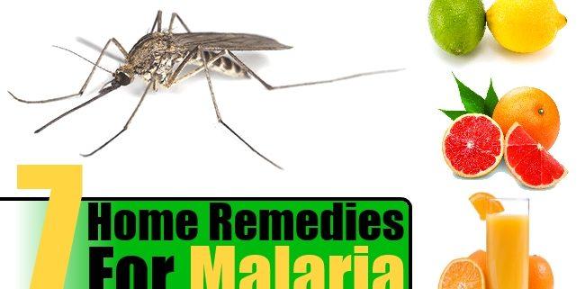 7 Natural Home Remedies for Malaria Disease